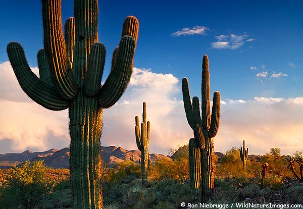 Microcurrent Gesichtsbehandlungen in Phoenix Arizona